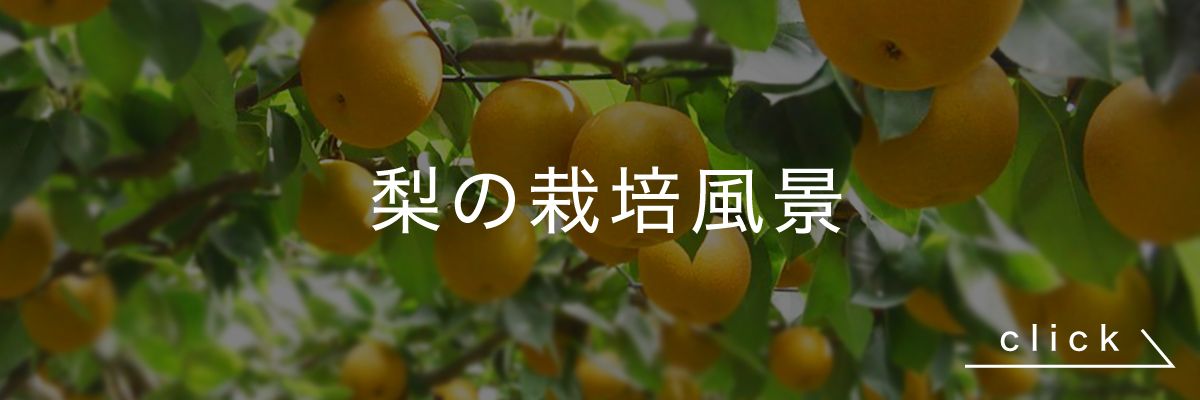 鈴果園の梨の栽培風景