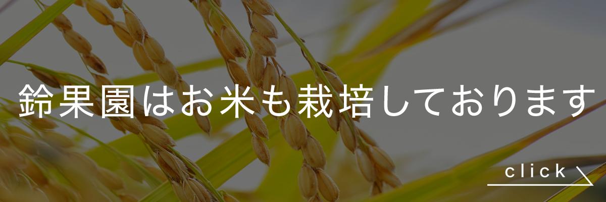 鈴果園のお米