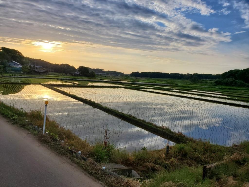 千葉県船橋市にある鈴果園の米栽培風景